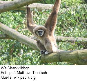 Ubuntu 7.10 Gutsy Gibbon